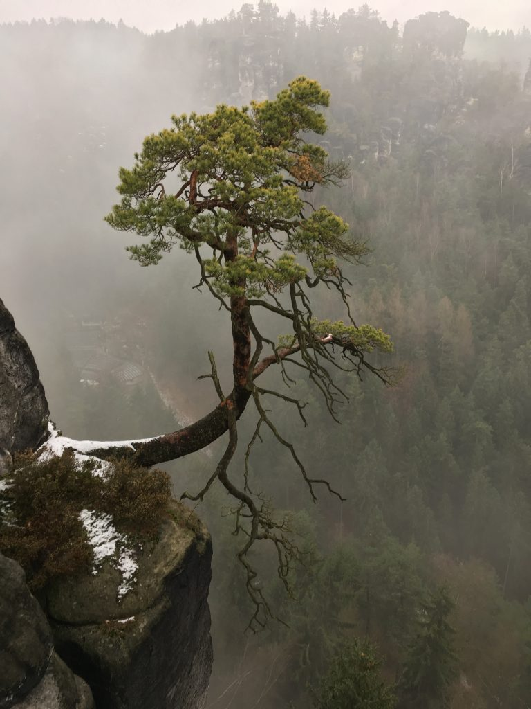 Baum in den Bergen